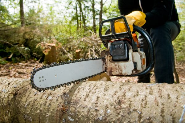 The Ideal Frequency For Tree Service