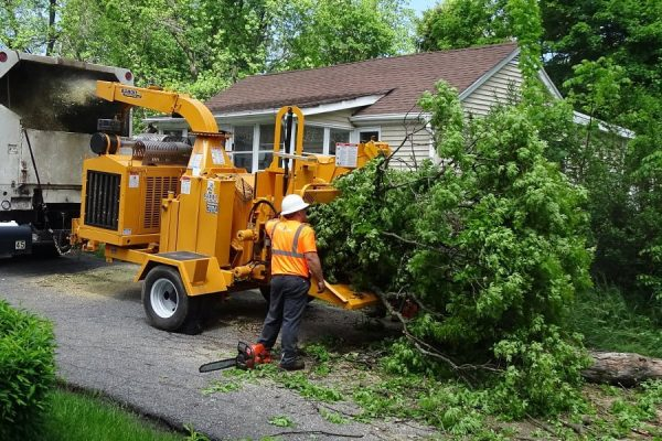 Using The Right Tools For Tree Service